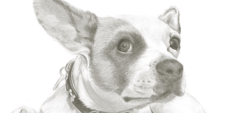 View my portraits of pets