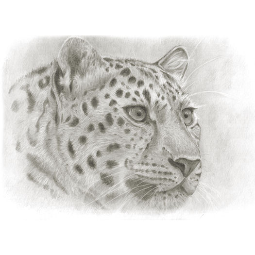 Pencil portrait of Spot on